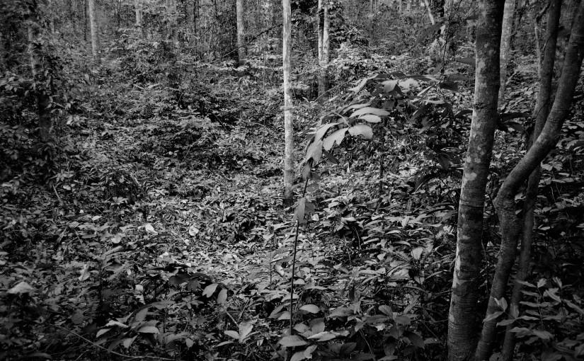 Nella giungla, sulle tracce dellaguerra