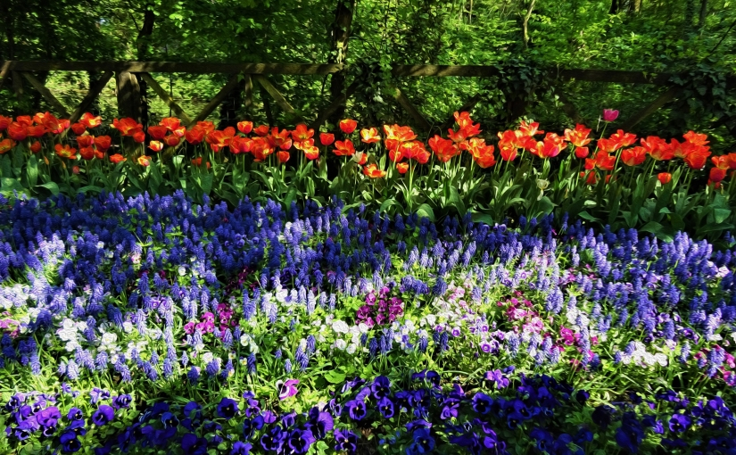 A giro tra i tulipani: di poesia, di colori e difelicità